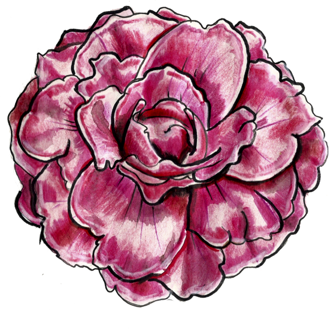 Wellcome Camellia sasanqua! ¡Bienvenida Camellia sasanqua!